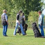 Hundetraining ©ABLICHTEREI e.U. - Claudia Spieß