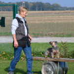 Rettungshunde Training ©ABLICHTEREI e.U. - Claudia Spieß